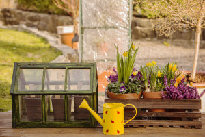 Spring flowers in a box and a small mini greenhouse in a garden