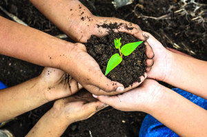 Tips To Reduce Your Carbon Footprint