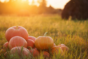 Thanksgiving Road Trip Tips for a Safe Journey