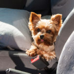Heading on a Road Trip? Ensure Your Pets are Ready with These Tips for Traveling with Pets